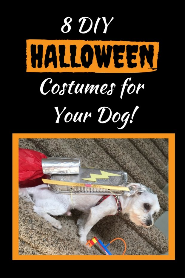 8 Adorable DIY Halloween Dog Costumes