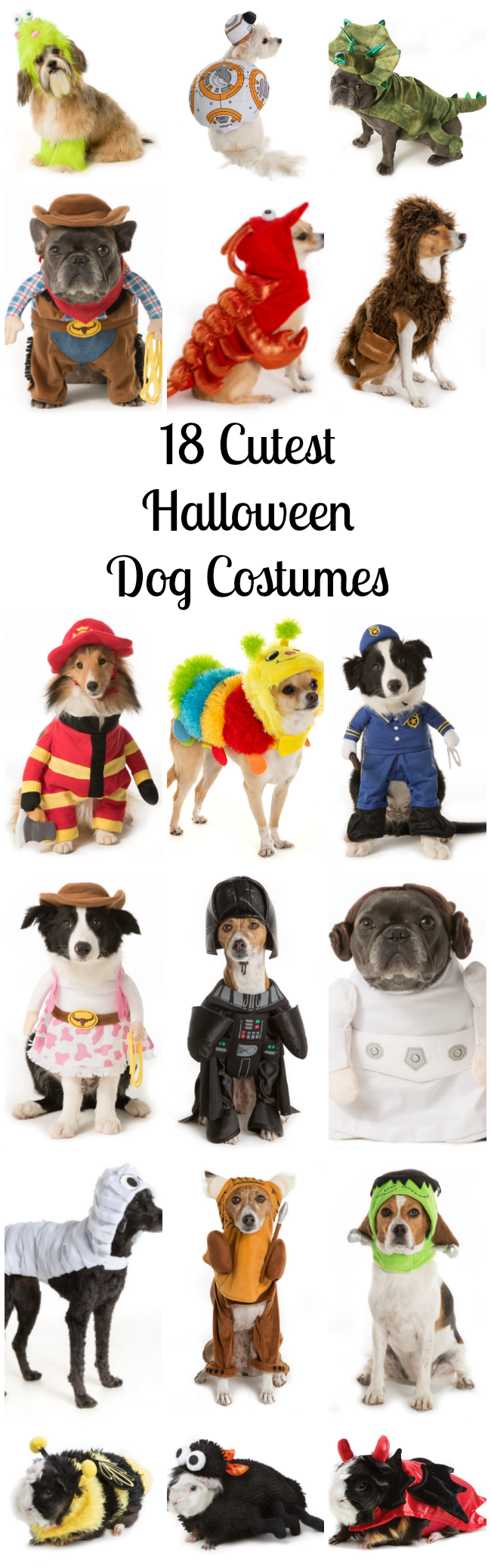 8 Cutest Halloween Dog Costumes