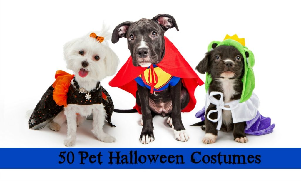 50 Awesome and Adorable Pet Halloween Costumes