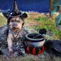 Dog Halloween Costume Ideas That Are Perfect For Parties